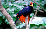 A Unique coloured bird