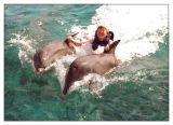 Josh being pulled by the dolphins
