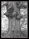 old tree bandw.jpg