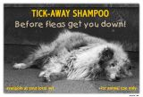 Before Fleas Get You Down
