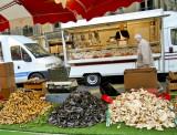Mushrooms, mushrooms....