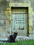Cat in search of a door on Diagon Alley
