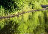 Pond of Green Ripples