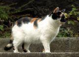orthodox polish cat