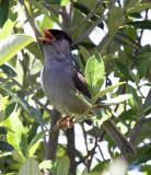 SOUTH AFRICA: Birds