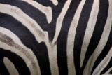 SOUTH AFRICA: Mammals