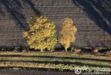 2009-11-08_165.jpg