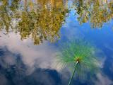 dans l'étang de Métis