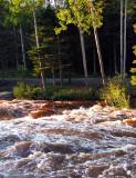 les bouleaux de la rivière du moulin