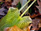 Papillon végétal