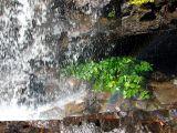 douche naturelle des plantes