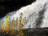 l'automne devant la chute