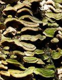 les champignons du tronc