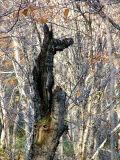 le tronc noir aux yeux de monstre