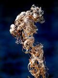 squelette de plante