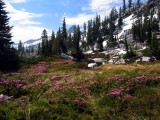 Morris Lake meadow