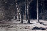 3rd December 2008  frozen trees