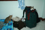 Andy's cats on my luggage, Chiang Mai