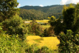 Farmland at Doi Inthanon National Park