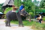 An elephant near Damnoen Saduak