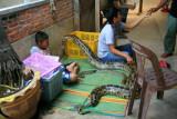 Snake boy, near Damnoen Saduak