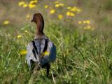 A Duck 06/07