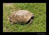 080714 Sea Turtle 1E.jpg