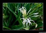 080703 Flowering Plant 1E.jpg
