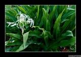 080703 Flowering Plant 2E.jpg
