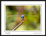 Dragonfly Smile