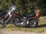Clean FX-Softail Harley
