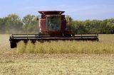 Harvest Soybean