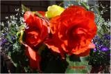 IMG_1003_Ma boîte à fleurs.jpg