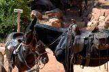 Resting Mule