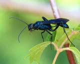 07 29 08, Bug eating a fly. ISO: 400, Nikon D50, Tamron 28-300 VC.JPG
