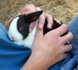 10 07 06 Bunny, Minolta  A1.jpg