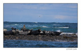 Farne Seals (055)