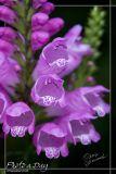 Blue & Purple Flowers