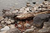 Driftwood Log.jpg