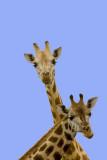 ugandan_wildlife