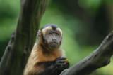 Singapore Zoo - Faces