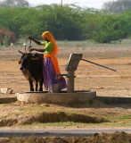 Woman, cow, water