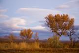 Sunrise Trees, Bosque del Apache