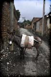 huayapan burro