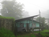 Misty Morning in the Cloud Forest