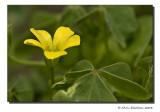 Tiny Yellow II