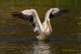 Birds of  LSU  & City Park  Lakes