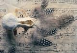 Still life III - Requiem for a Bird (2)