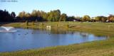 Bowie Town Center Pond