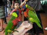 More bird feeding.